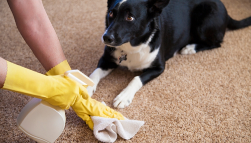 Carpet Cleaning bad smells