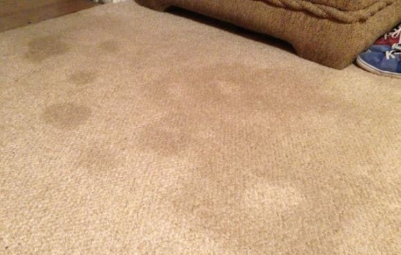 carpet cleaning tips on stains